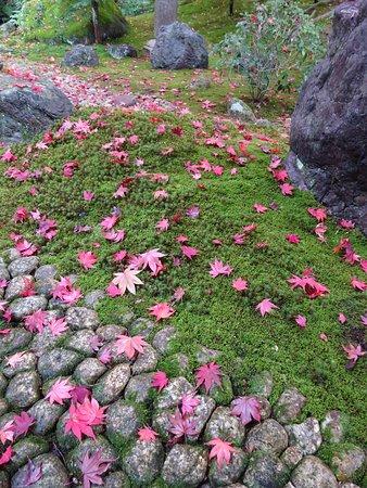 紅葉の時期は素晴らし絶景が楽しめます。