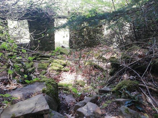 Central Tzoumerka, Greece: Κυψέλη, στο δάσος της Ρουπακιάς. Μόλις 3 km από τον Ξενώνα Κυψέλη..