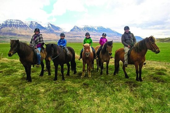 Horse Riding Tour for all ages and...