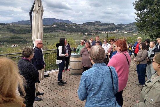 Amarone vinsmaking fra Verona