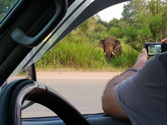 Inamaluwa, Sri Lanka: Elephant seen on organized Safari Trip