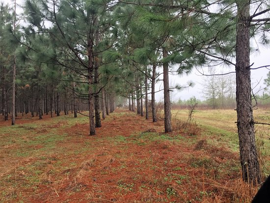 Glennville, GA: View native long leaf pine trees on our farm and native plants and wildlife during the tour.