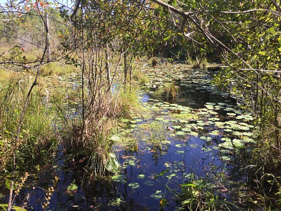 Glennville, GA: Observe natural artesian springs and ponds