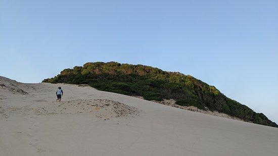 iSimangaliso Wetland Park, แอฟริกาใต้: Beautiful vegetated sand dunes at Thonga Beach.