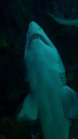 Keine Warteschlangen: Ripley's Aquarium of Canada in Toronto Foto