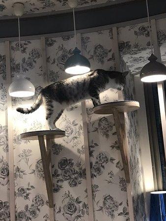 Cat Cafe Mocha Harajuku Takeshita Street