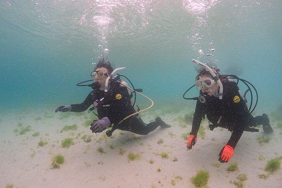 Feel Dive