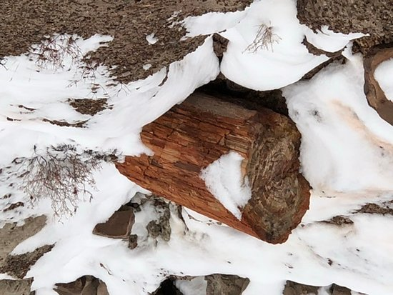 Petrified Forest in the wintertime