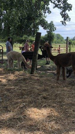 Grosse Ile, MI: Enjoying the farm