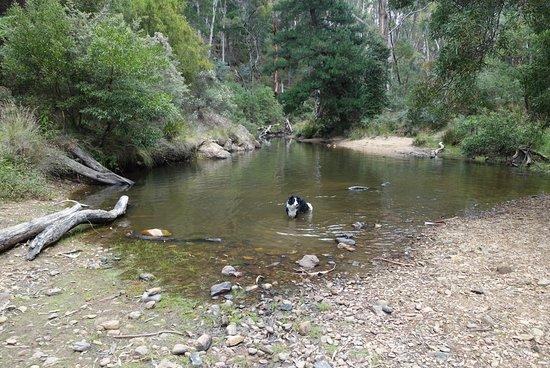Blackwood Forest, Австралия: Blackwood Mineral Springs Caravan Park