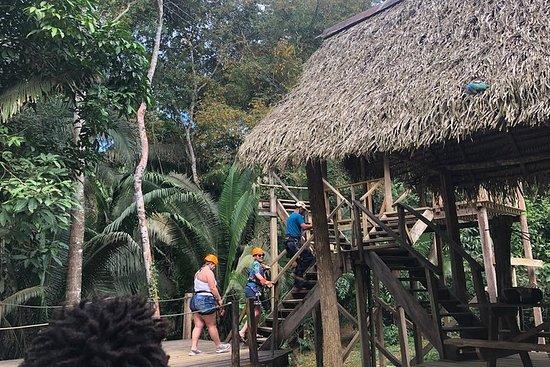 Rain forest Zip Line Adventure...