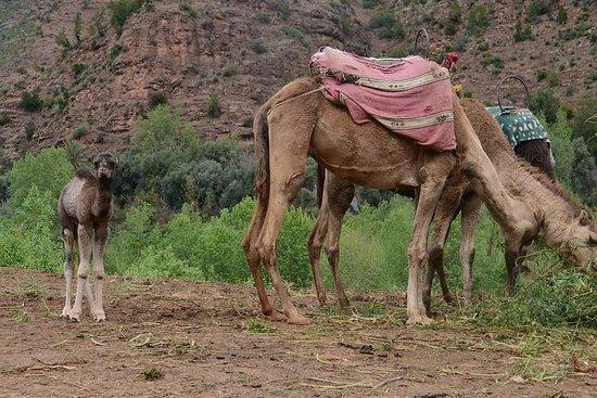 Ourika dalstur med solnedgang kamelritt
