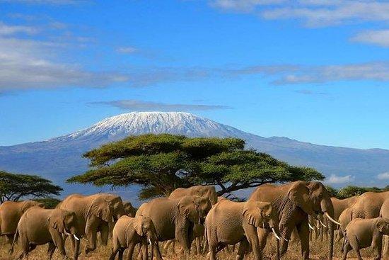 Amboseli privato di 3 giorni / Mt