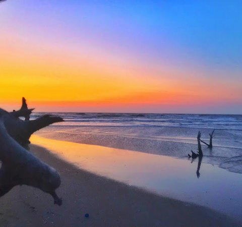 Vadakara, Индия: Iringal Estuary(Kolavi Palam Beach) at Payyoli adds to Kozhikode's repertoire of hosting pristine and well maintained beaches. Considered a swimmer's paradise, take one step in and you are greeted by stretches of golden sands, with shallow waters that border Velliyamkallu.  It is also important to note that it is here, during November - December annually, that endangered Olive Ridley turtles come in to lay eggs. There is a nature conservation centre here, 'Theeram', started by the fishermen to