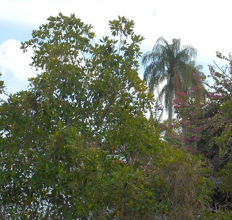Thick vegetation provides a screen from neighbors. An orchid tree is blooming here.