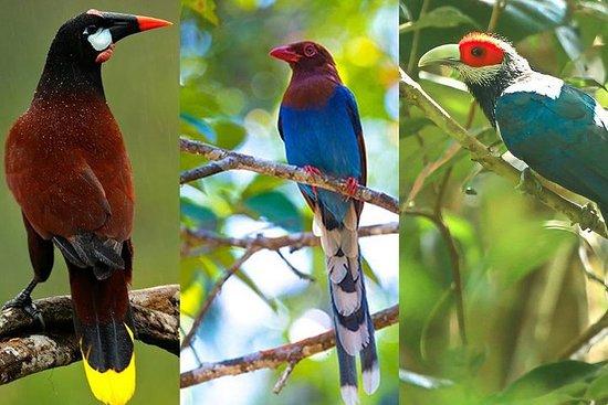 Visite ornithologique au Sri Lanka...