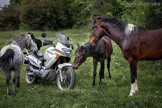 Tours de cavaliers (Vikos-Aoos...