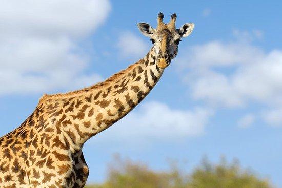 Mt. Quênia, Meru e Samburu - 6 dias...