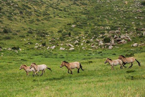 1 Tagestour: Khustai National Park...