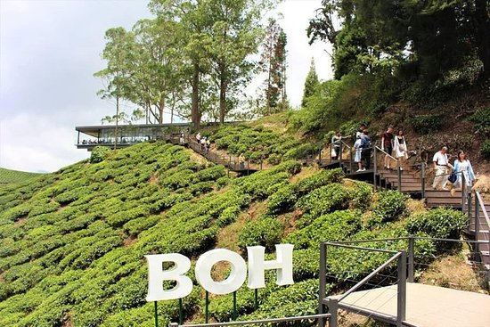 ONE DAY PRIVATE TOUR – Cameron Highland...