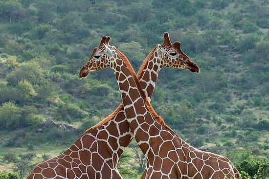 Imagine Africa Safaris