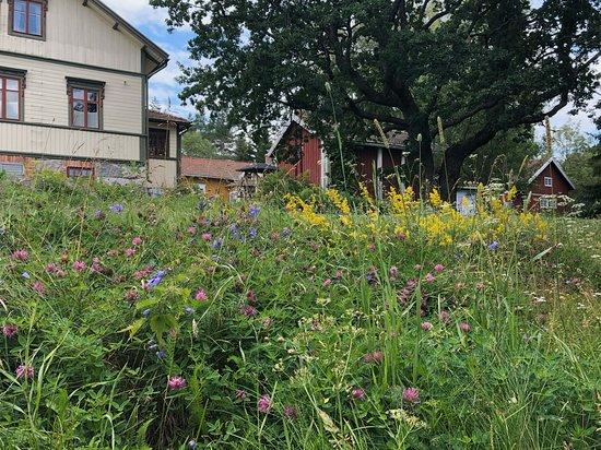 Masko, Finlândia: Summer and wild flowers Kesä ja niittykukat