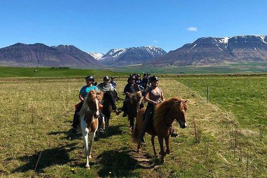 Horse Riding Tour in Varmahlíð...