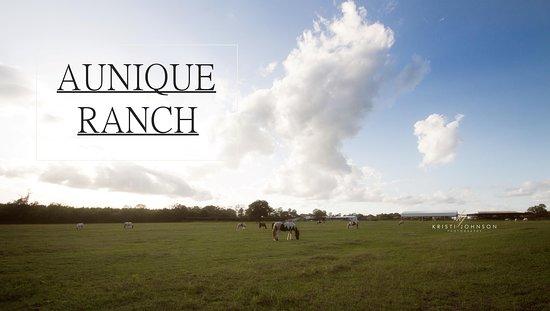 Aunique Ranch Gypsy Cob Vanner Horses
