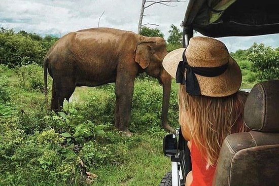 All Inclusive Safari i Wilpattu...