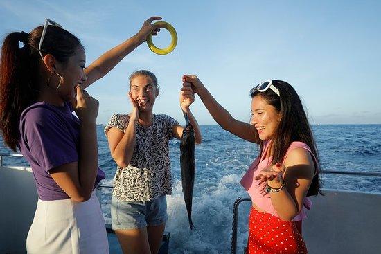 Observation des dauphins, pêche et...