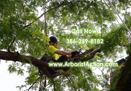 Daytona Beach, FL: Professional Arborist Services
