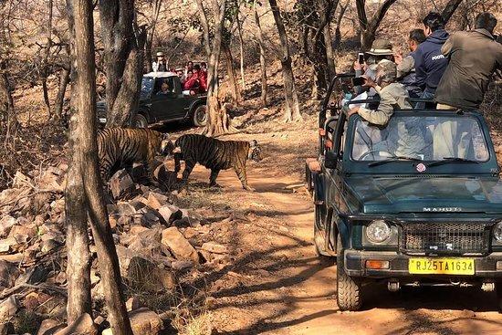 ranthambore safari 360