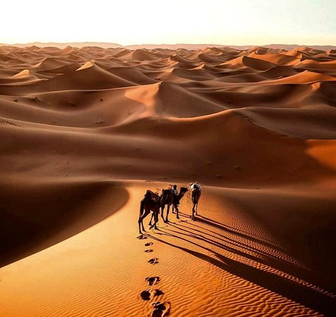 Enjoy Desert Tours