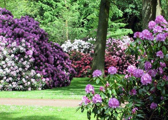 Rhododendronpark Bremen In Voller Blüte