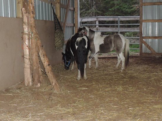 Wetmore, MI: The ponies and their accommodations.
