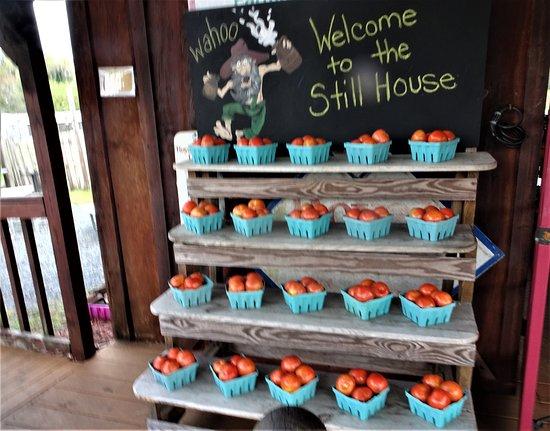 Yalaha, FL: Organic Tomatoes for Sale