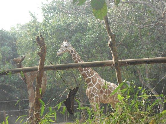 Bhubaneswar, India: Nandankanan zoo