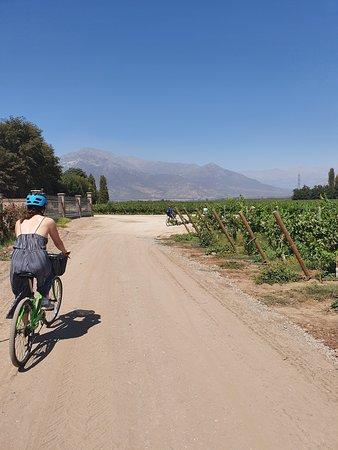 Fiets- en wijnreis Halve dag Maipo-vallei Foto