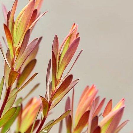 Mount Tomah, Австралия: Mt Tomah Botanical Gardens