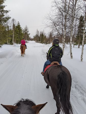 Horse riding through a winter forest