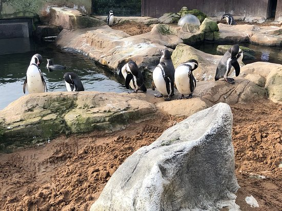 The penguins were hilarious to watch