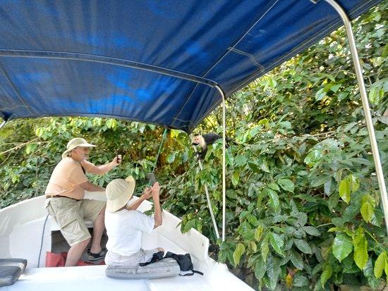 Osa Mangrove Tours: Mis clientes felices con un mono capuchino en nuestro tour pudes tomar tus fotos muy serca de los monos