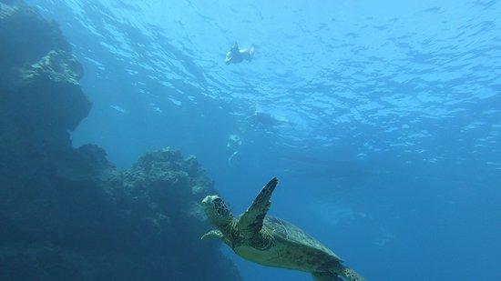 תמונה מKayak and snorkel tour