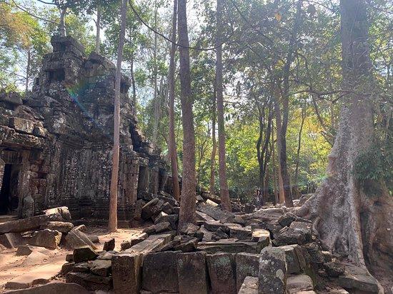 Sunrise at Angkor Wat, Bayon and Ta Prohm Temple Tour: Jungle temple
