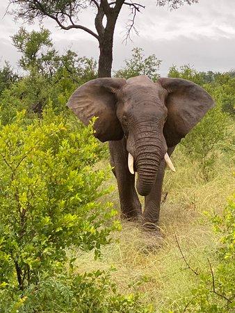 Krugerův národní park, Jihoafrická republika: Kruger Park