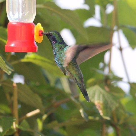 El Jardin, Costa Rica: Colibríes excelente terapia personal!