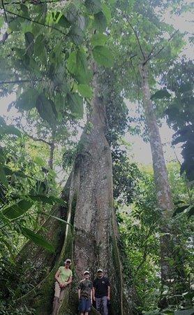Tamarindo Photo