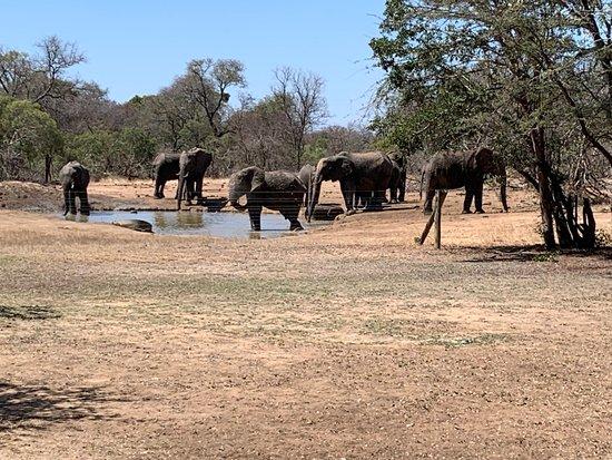 Krugerův národní park, Jihoafrická republika: Elephants outside our hut in the a.m.