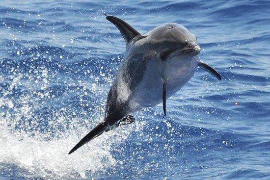 Delfin- und Walsafari