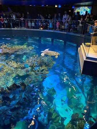 New England Aquarium (Boston) - All You Need to Know ...